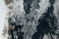 Sea Ice in the Greenland Sea