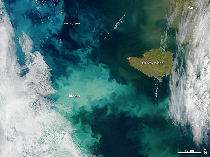 Bloom in the Bering Sea