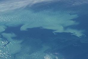 Bloom in the Bering Sea