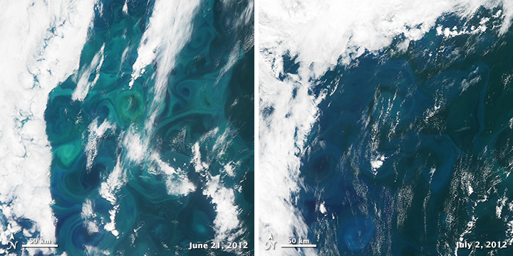 Demise of a Phytoplankton Bloom