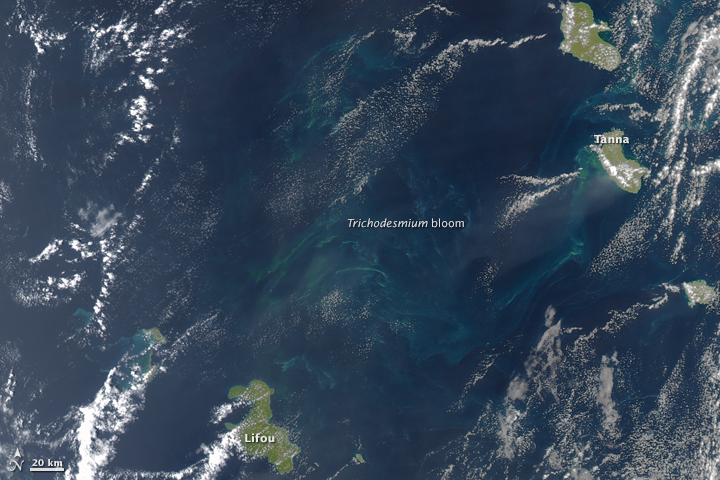 """Sea Sawdust"" in the Southwest Pacific Ocean"
