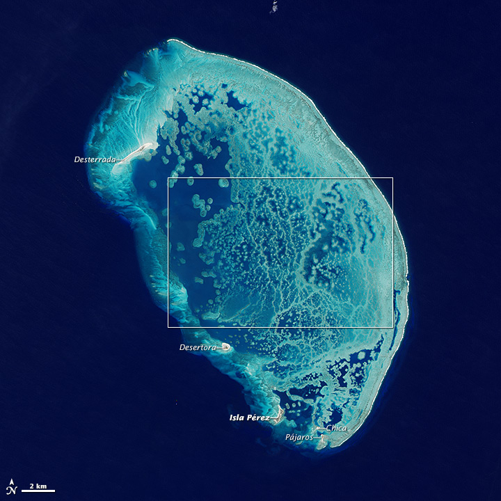 Reef in the Southern Gulf of Mexico