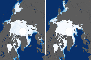 Despite Antarctic Gains, Global Sea Ice Is Shrinking
