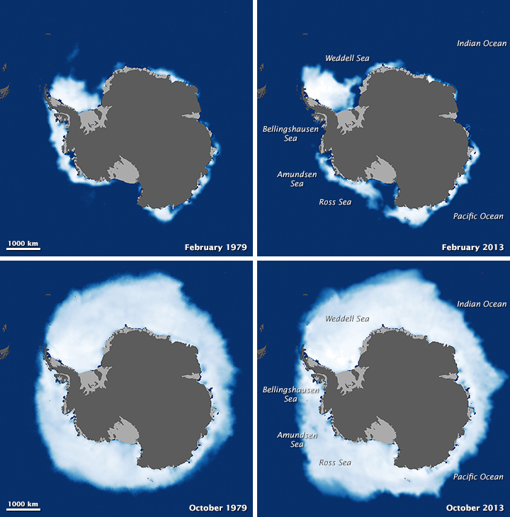 Despite antarctic gains global sea ice is shrinking image of the