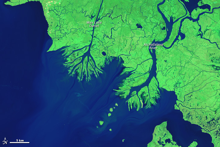 New Land on the Louisiana Coast