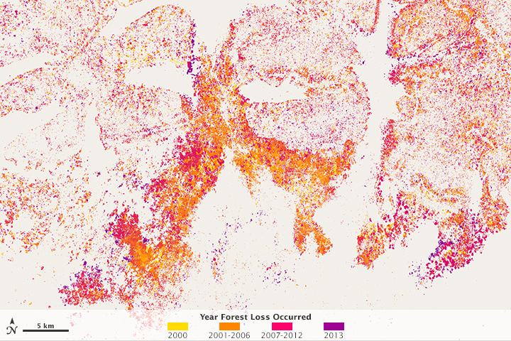 Mapping Forest Loss with Landsat