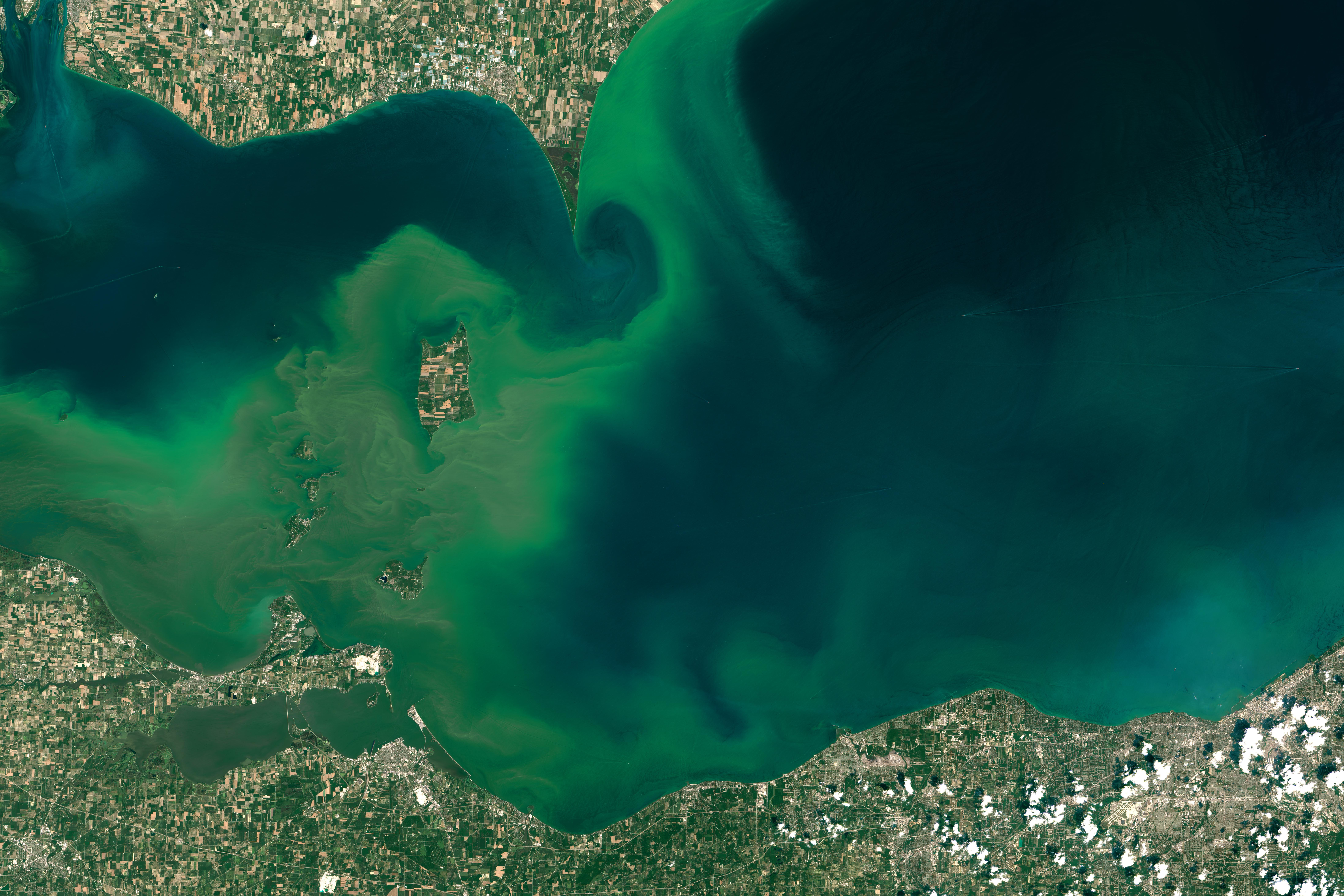 Algae Boom in Lake Erie.