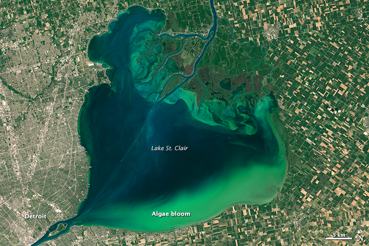 Algae Boom in Lake Erie