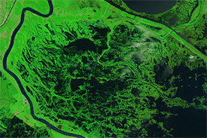 Signs of Katrina Linger in the Marshes - selected image
