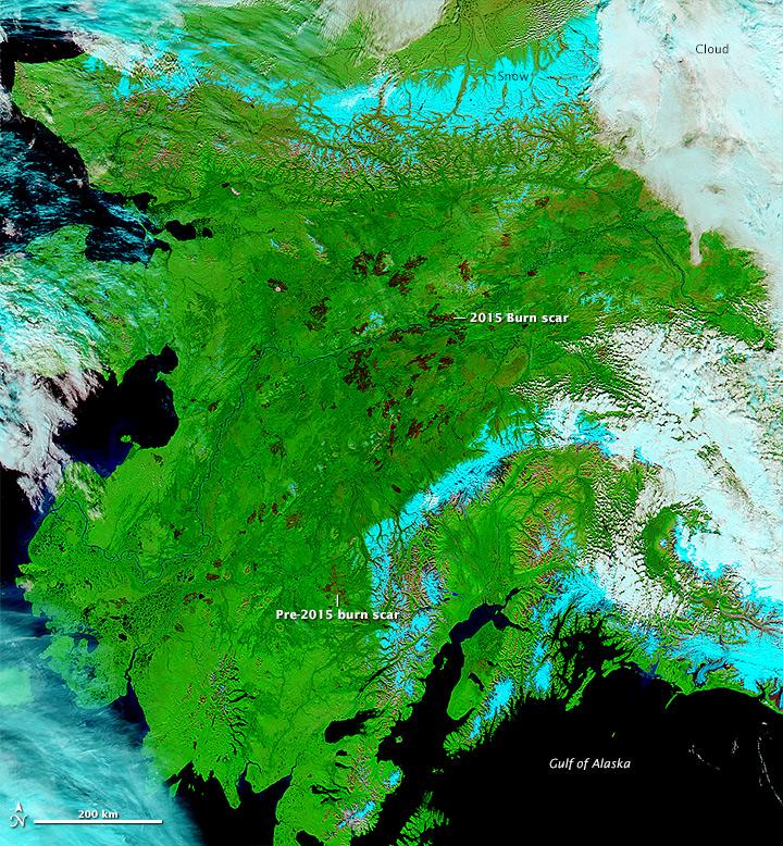Alaska Charred