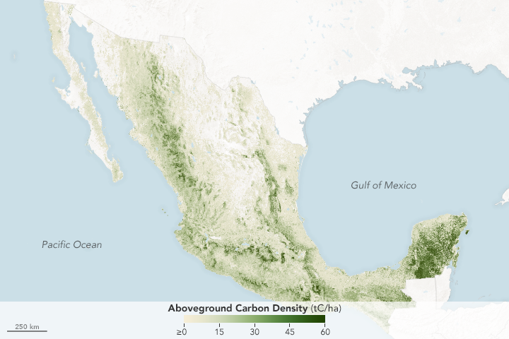 Counting the Carbon in Mexico's Forests - related image preview