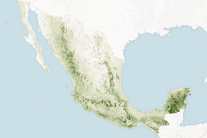 Counting the Carbon in Mexico's Forests - selected image