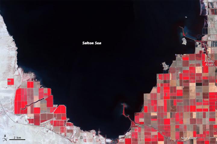 Shrinking Shoreline of the Salton Sea