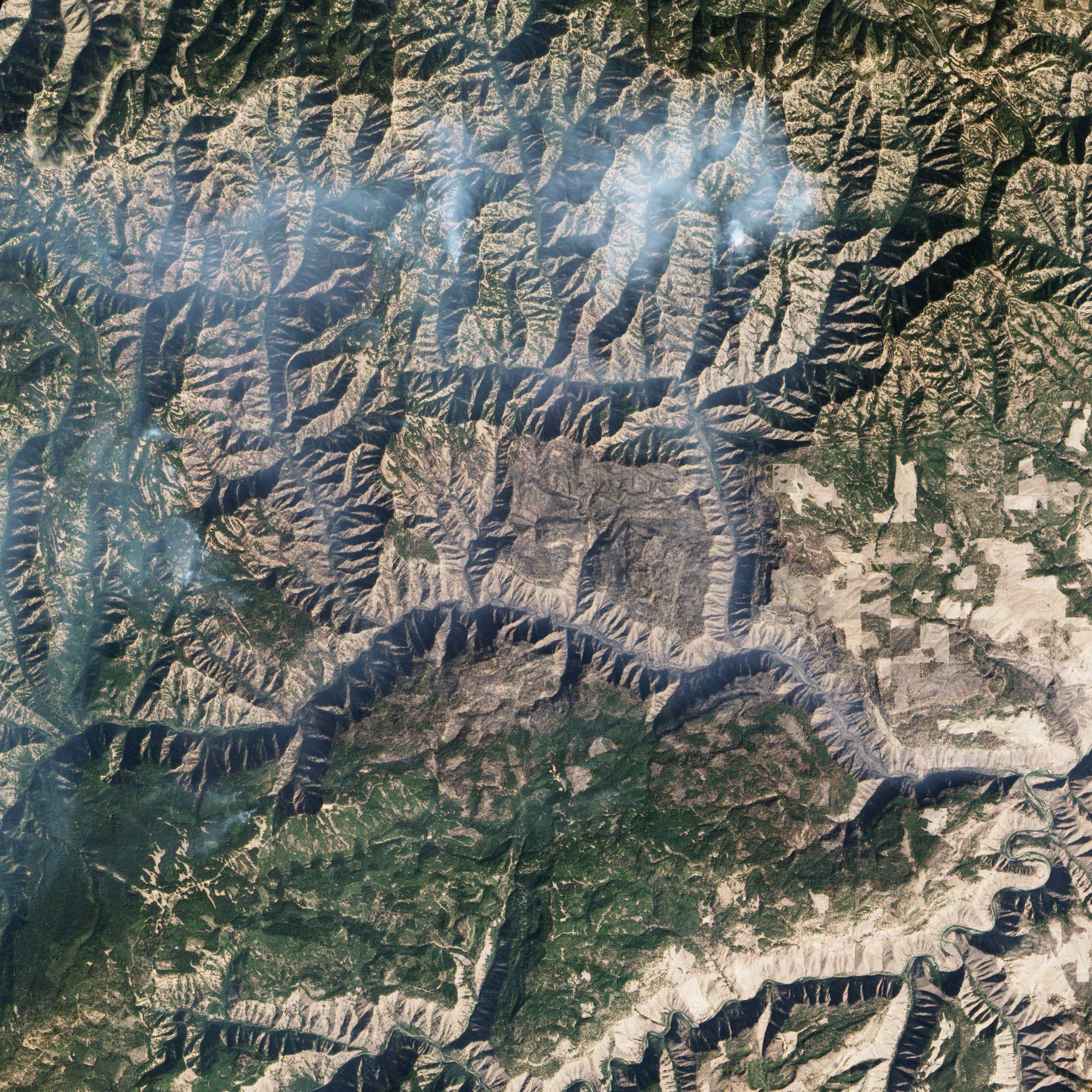 Grizzly Bear Complex Fire  - related image preview