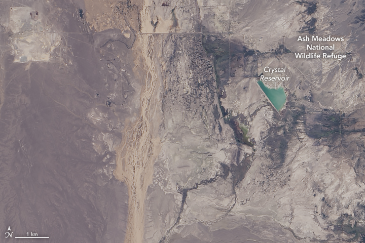 Deluge in the Amargosa and Death Valleys