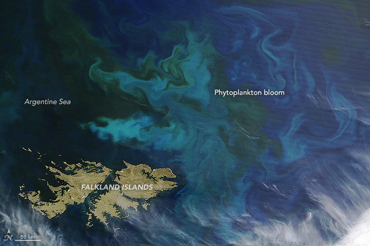 Phytoplankton Blooms off the Falkland Islands
