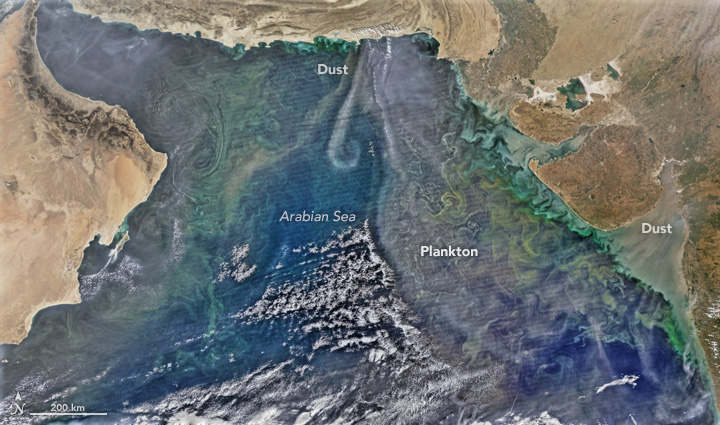 All Stirred Up in the Arabian Sea
