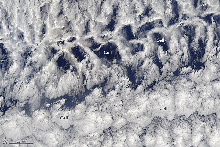 Open- and Closed-Celled Clouds over the Pacific