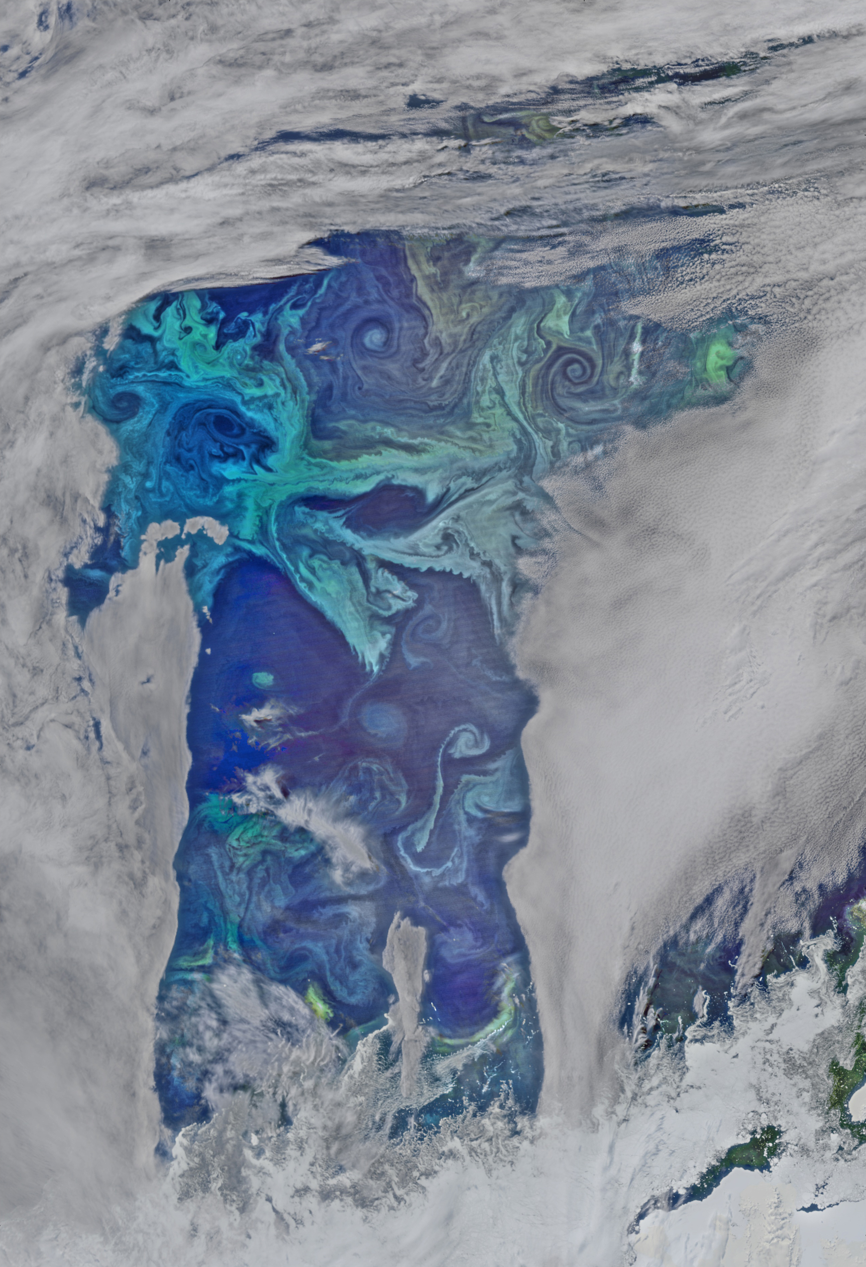Oxygen Factories in the Southern Ocean - related image preview