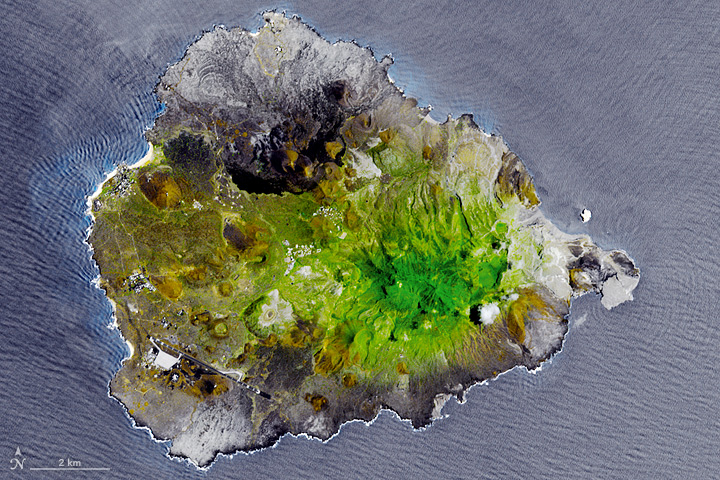 Greening Ascension Island - related image preview
