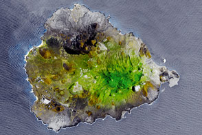 Greening Ascension Island - selected image