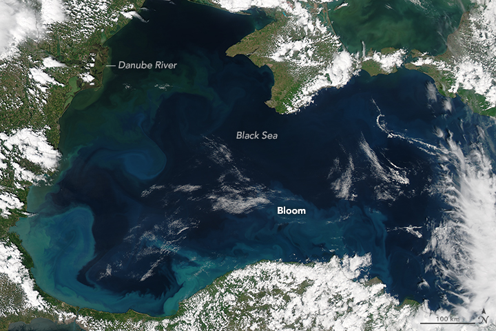 Bloom in the Black Sea