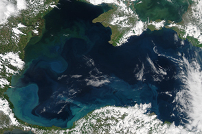 Bloom in the Black Sea