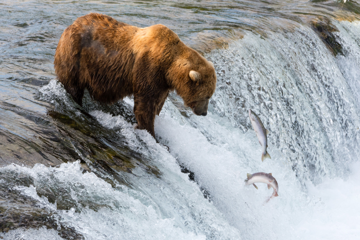 Katmai National Park, Alaska - related image preview