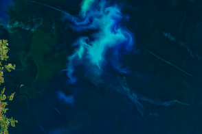 Phytoplankton in the North Sea