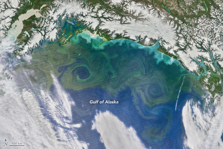 Bloom in the Gulf of Alaska