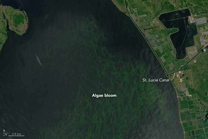 Bloom in Lake Okeechobee