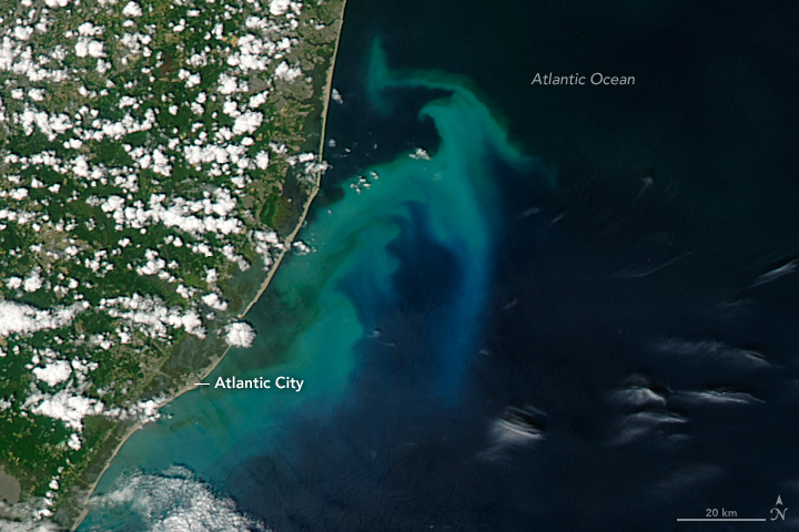 Phytoplankton Bloom off New Jersey