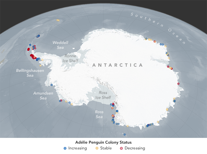 Penguin Map Of The World.Climate Change May Shift Or Shrink Penguin Habitat