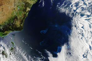 Phytoplankton in the Tasman Sea