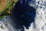 Phytoplankton in the Tasman Sea