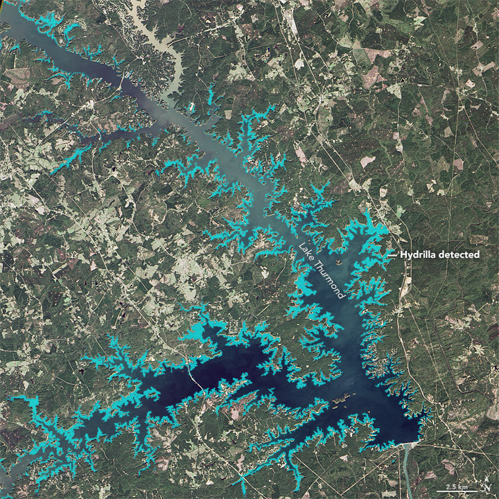 Mapping a Tenacious Invader in Lake Thurmond