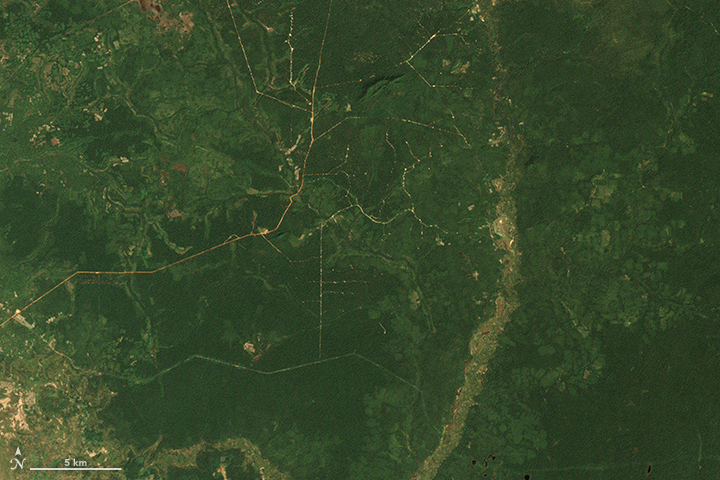 Cambodia's Forests Are Disappearing