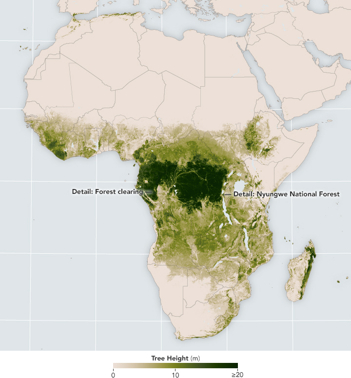 Cutting into Africa's Green Heart - related image preview