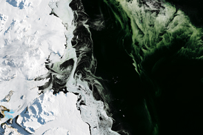 Antarctic Sea Ice is Lean and Green