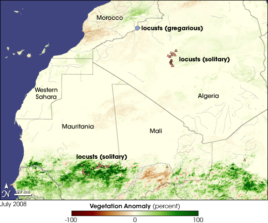 Locusts in West Africa - related image preview