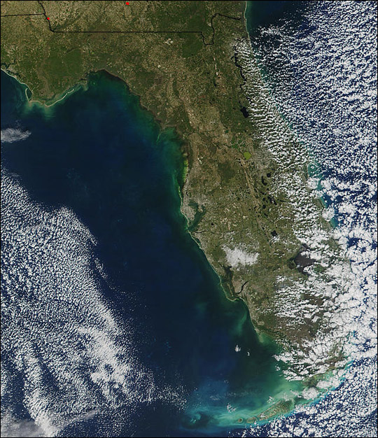Red Tide Along Florida's West Coast
