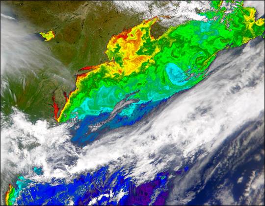 North Atlantic in Bloom - related image preview