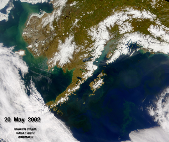 Phytoplankton in the Gulf of Alaska
