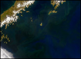 Phytoplankton in the Gulf of Alaska - selected image