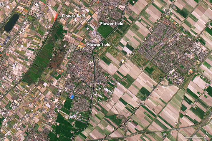 Kenampakan Kebun Tulip Citra Landsat 8