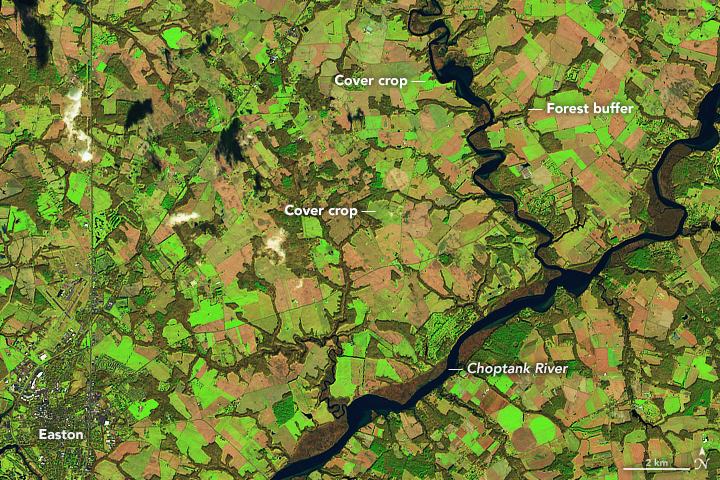 Satellites Eye Winter Cover Crops