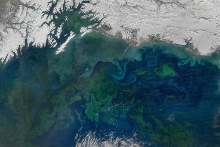 A Spring Bloom in the Gulf of Alaska