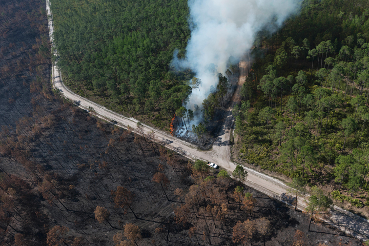 Fire Scars the Okefenokee - related image preview