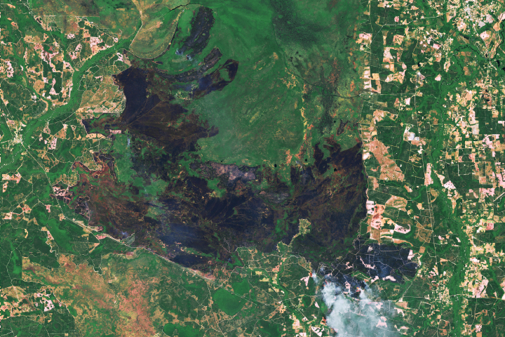 Fire Scars the Okefenokee