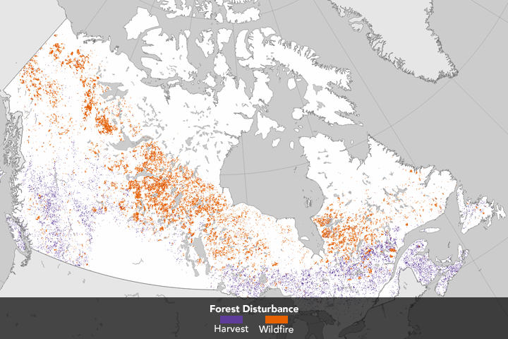 Tracking Forest Change in Canada - related image preview